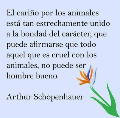 """""""La conmiseración con los animales está íntimamente ligada con la bondad de carácter, de tal suerte que se puede afirmar seguro que quien es cruel con los animales, no puede ser buena persona. Una compasión por todos los seres vivos es la prueba más firme y segura de la conducta moral."""" Arthur Schopenhauer."""