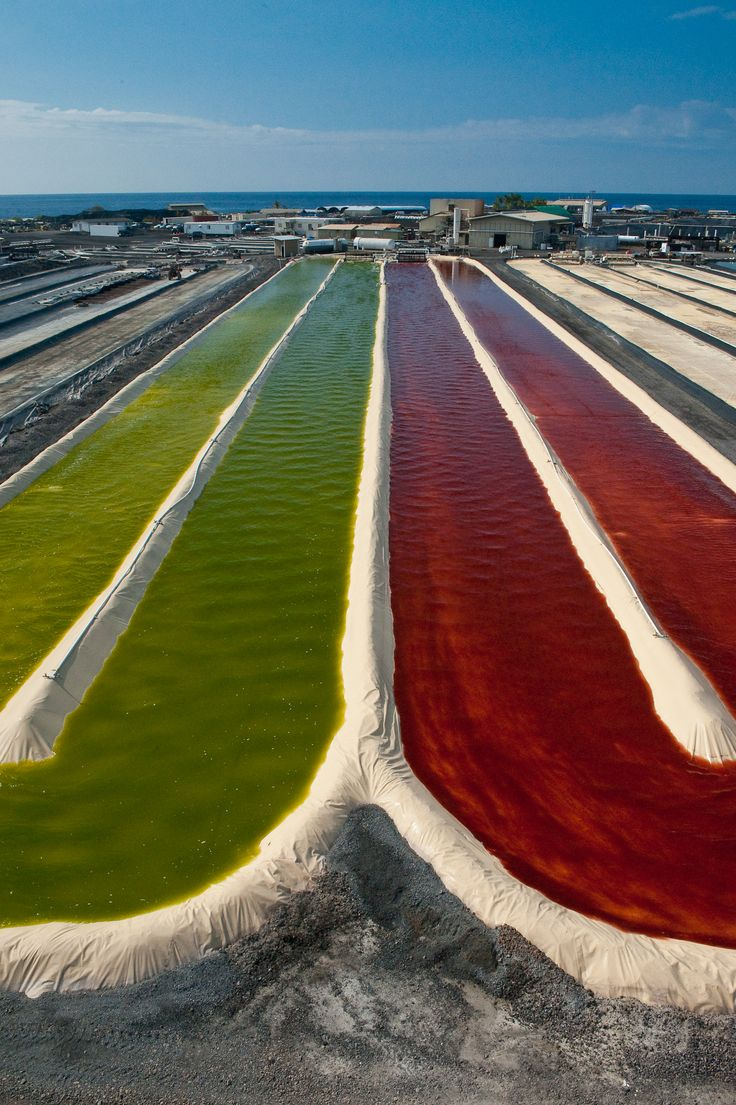Astaxanthin Ponds Turning From Green To Red In Kona