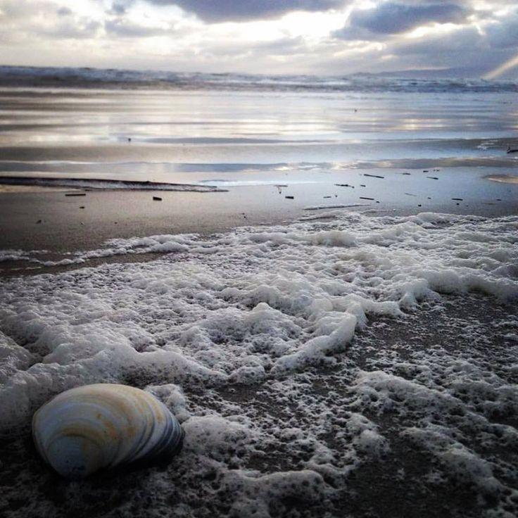 SOUTHLAND, NZ: Shells at Oreti Beach, Invercargill. #mysouthland #nzmustdo #nzmustsee