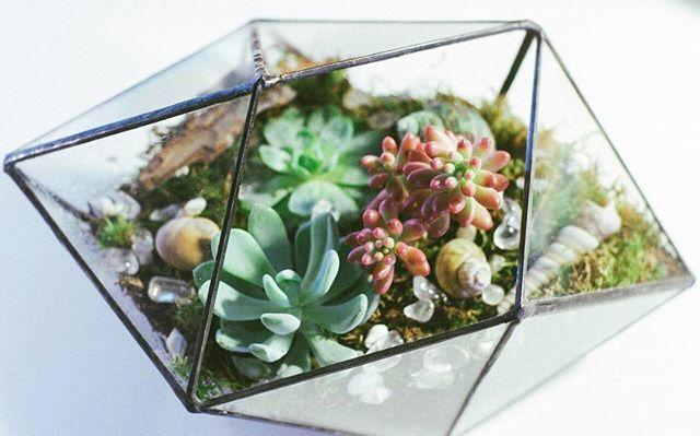 Приятно вернуться к любимой работе! 🌿💓 #флорариум #террариум #мох#суккуленты #кактус #кактусы#подарок#витражтиффани #handmade#изстекла#glasshouse#glassplanter#succulents #cactus#succulent#gift#handcrafted#stainedglass#glass#florarium #terrarium #moss#минимир#минисад#leviflower