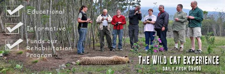 Join us for 1 hour guided tour of the centre to learn about our indigenous cats of South Africa