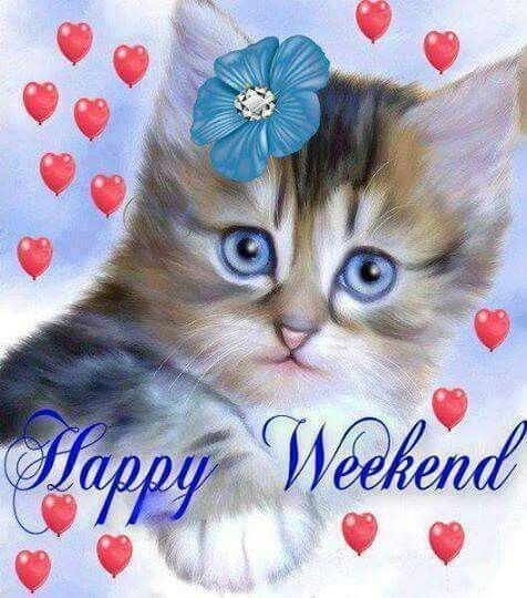 Image result for happy weekend kitty images
