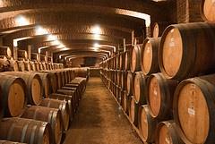 Adega da Undurraga (Guilherme Bacellar Moralez) Tags: chile travel santiago wine winery atacama vinicola undurraga