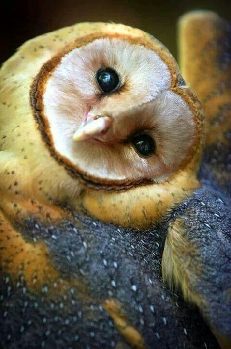 A happier little owl I don't think I've ever seen.  Cute little smile.