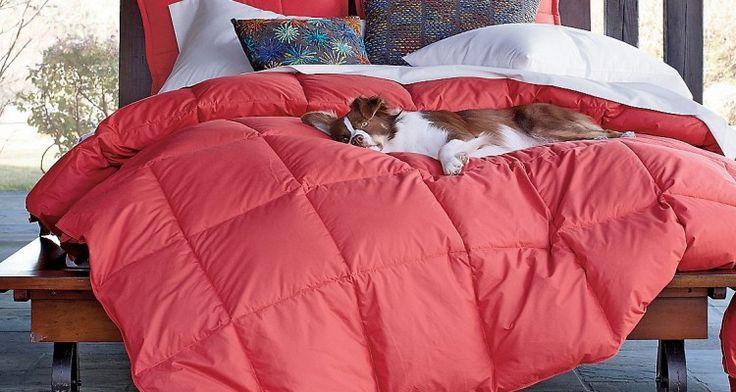 How Smart Designs Through Cute Dorm Bedding For Sluggard