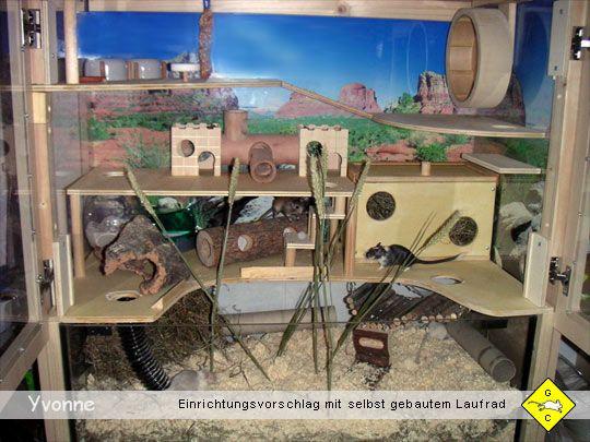 Rennmaus Terrarium Bauanleitungen Bastelanleitungen Käfigeinrichtung Wüstenrennmäuse Zubehör rennmaus.net Gerbils Crossing
