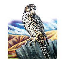Native NZ Falcon Photographic Print
