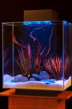 Amazon.com: Fluval Edge 12-Gallon Aquarium with 42-LED Light