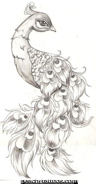 peacock tattoo flash