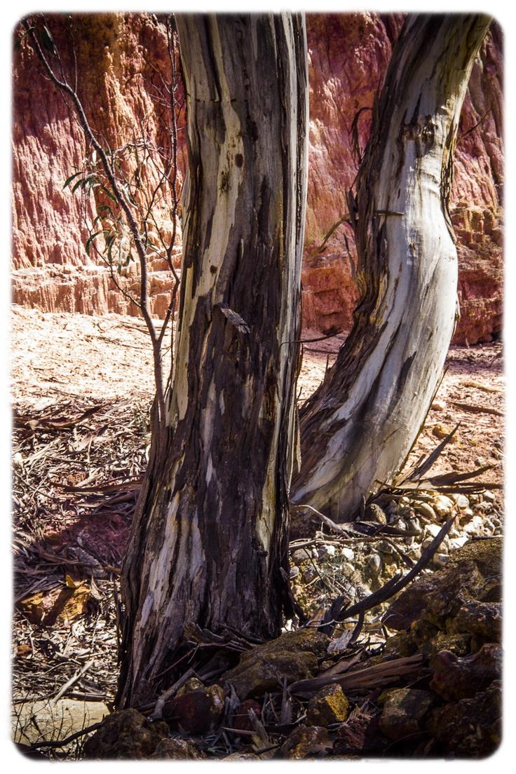 Even more Central Australia