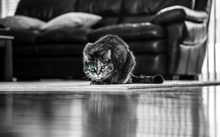 Download wallpapers cat, monochrome, 4k, pets, cars, green eyes