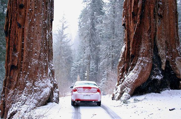 10 National Parks That Are Better in Winter // Sequoia National Park