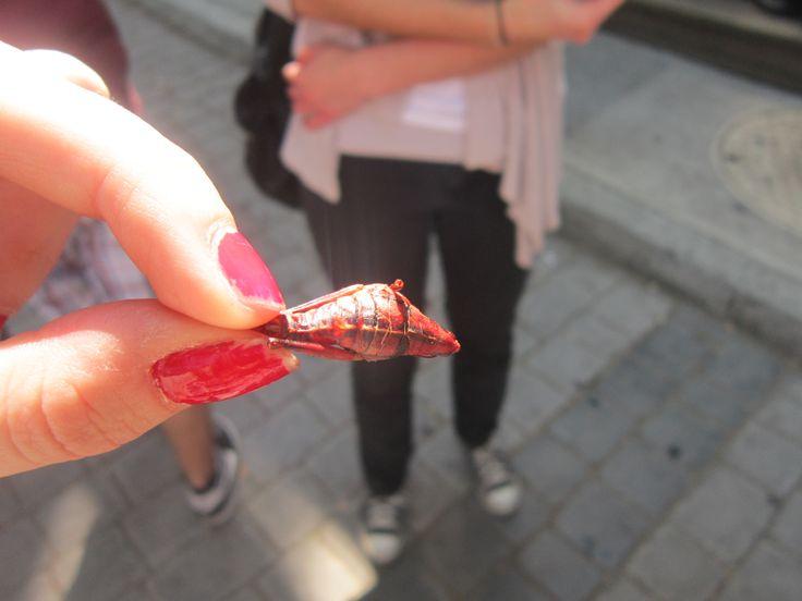 chapulines : insectos cocinados!! comestibles !  de echo ya me comí uno ! se sabe muy ácido
