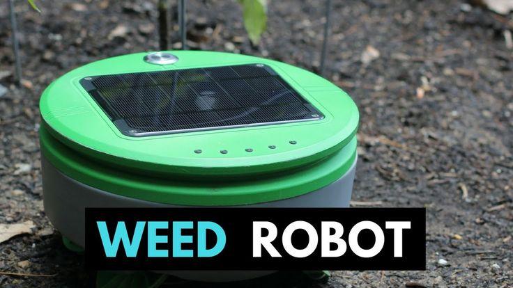 Tertill  - A weed whacking robot to patrol your garden