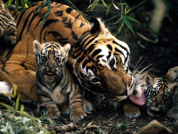 Nice Pictures of Baby Animals and Their Mothers-AmO Images-AmO Images