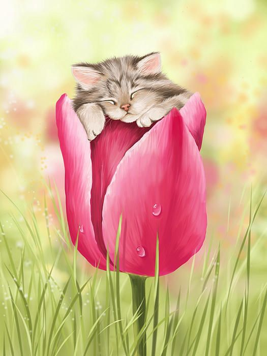 Image result for spring cat images