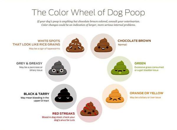 Best  Poo Chart Ideas On   Color Of Urine Pee Chart