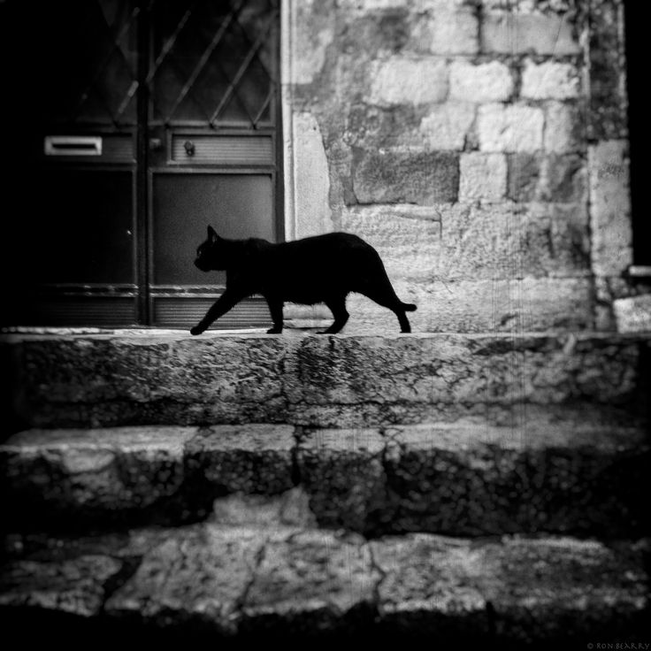 Street Cat, Dubrovnik by Ron Bearry on 500px