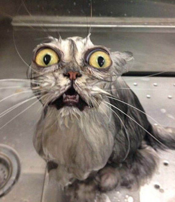 Anche i gatti, talvolta, possono assumere delle espressioni davvero strane. Complici pose improbabili, docce improvvisate o ingrati primi piani che padroni burloni non esitano a immortalare, ecco la classifica delle facce da gatto più divertenti di internet