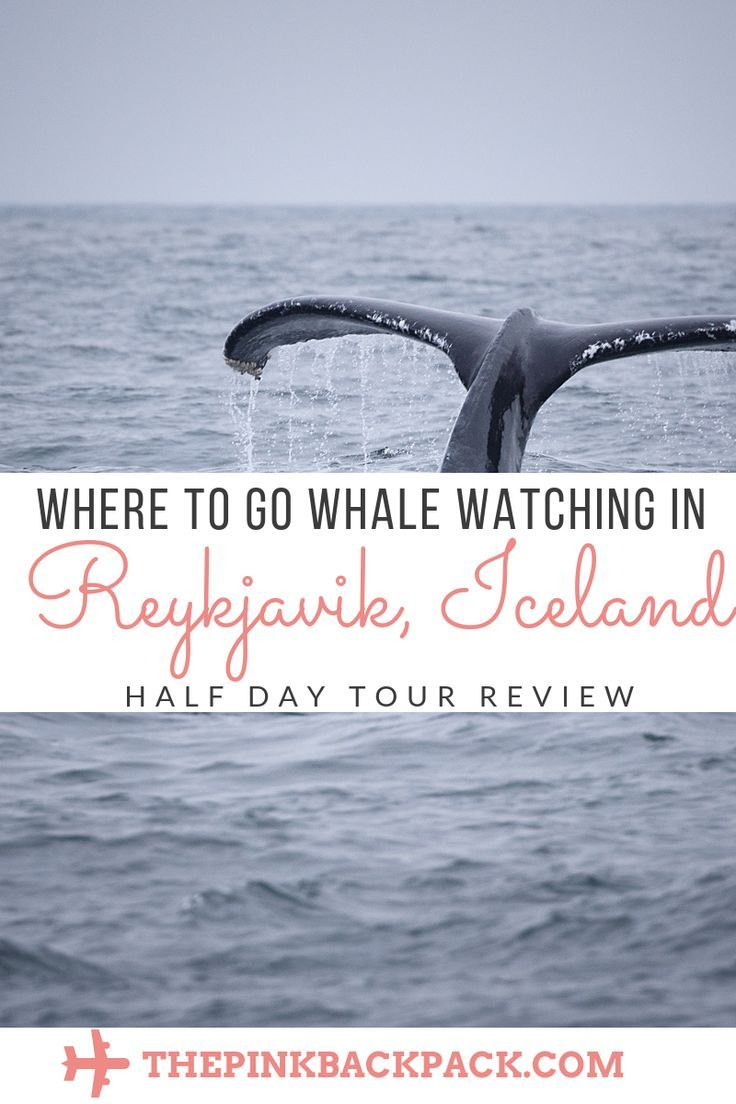 Whale Watching Reykjavik: Elding Tours | Whale watching