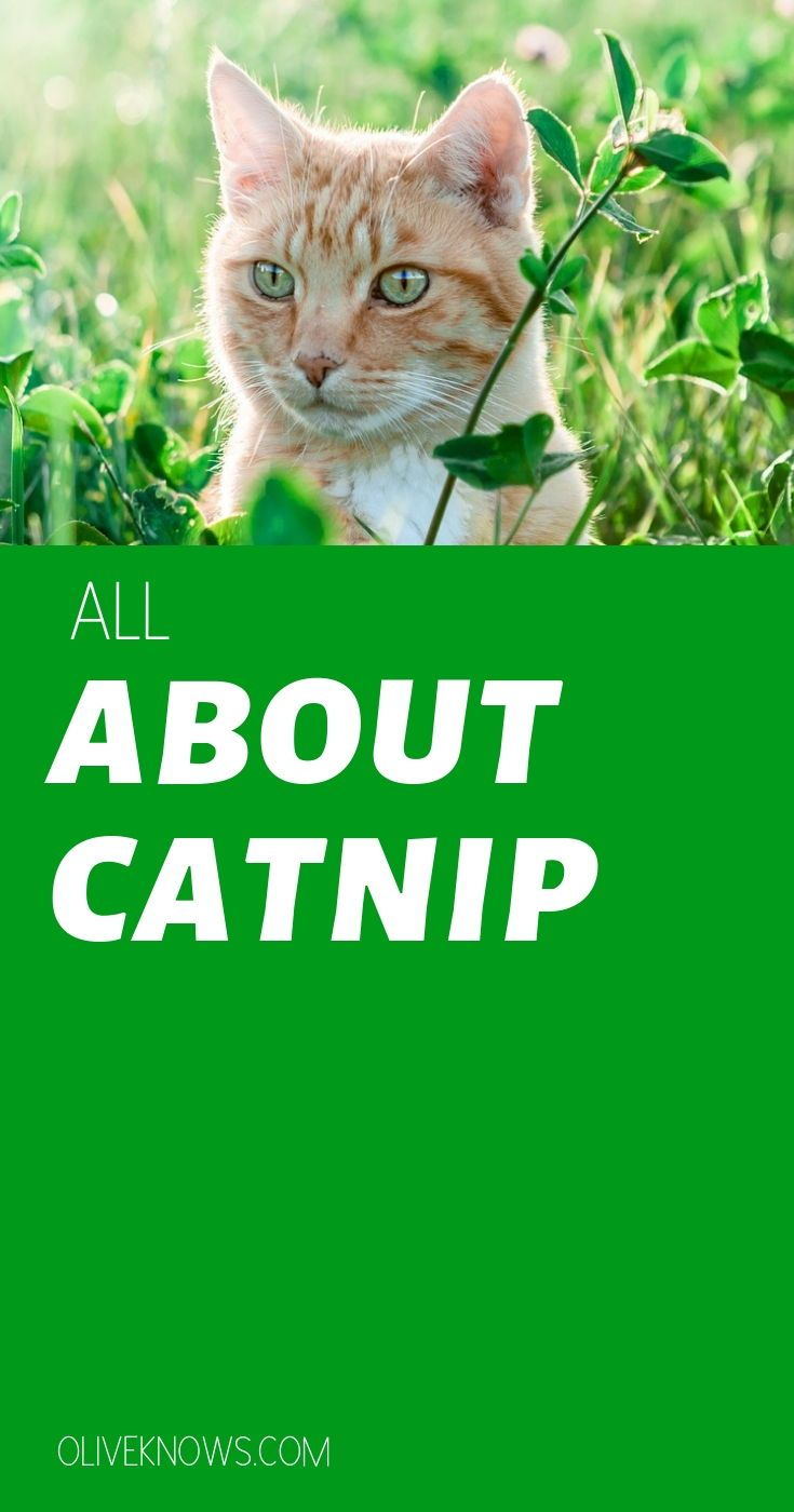 All About Catnip Getting A Kitten Cat Insurance Sick Cat