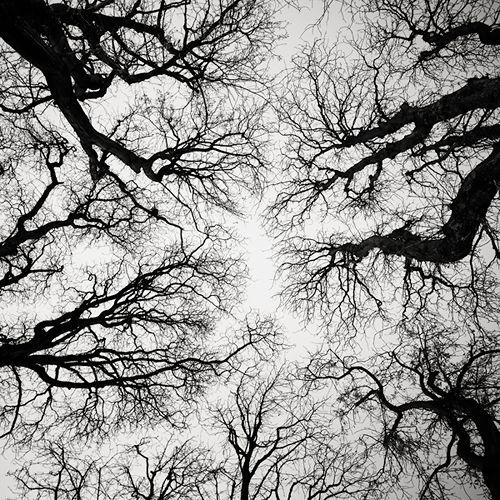 Josef Hoflehner, Chestnut Trees II - Paris, France, 2011