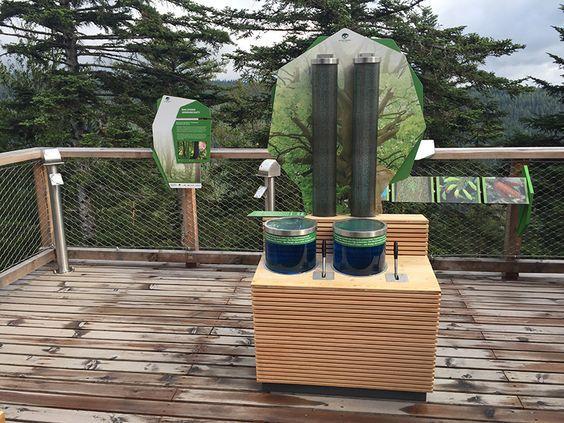 Interaktives Exponat / Hands-On zum Thema Wassertransport im Baum. Konzipiert und realisiert von Impuls-Design.