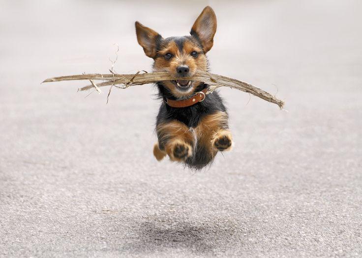 1X - Flying Dog by Cristina Palma Moreira
