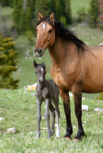 Tiny new foal and mare. Oh, that baby horse is so cute! https://presentbaby.com
