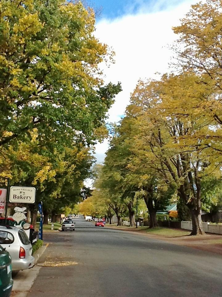 Ross Autumn trees