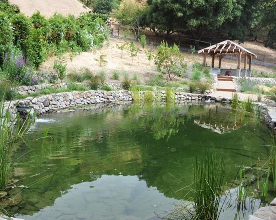 natural swimming pool: Gardens Ideas, Landscape Architecture, Dreams, Eclectic, Dragon, Landscapes, Photo, Huettl Landscape, Asian Gardens