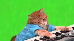 Resultado de imagem para gatinho tocando piano