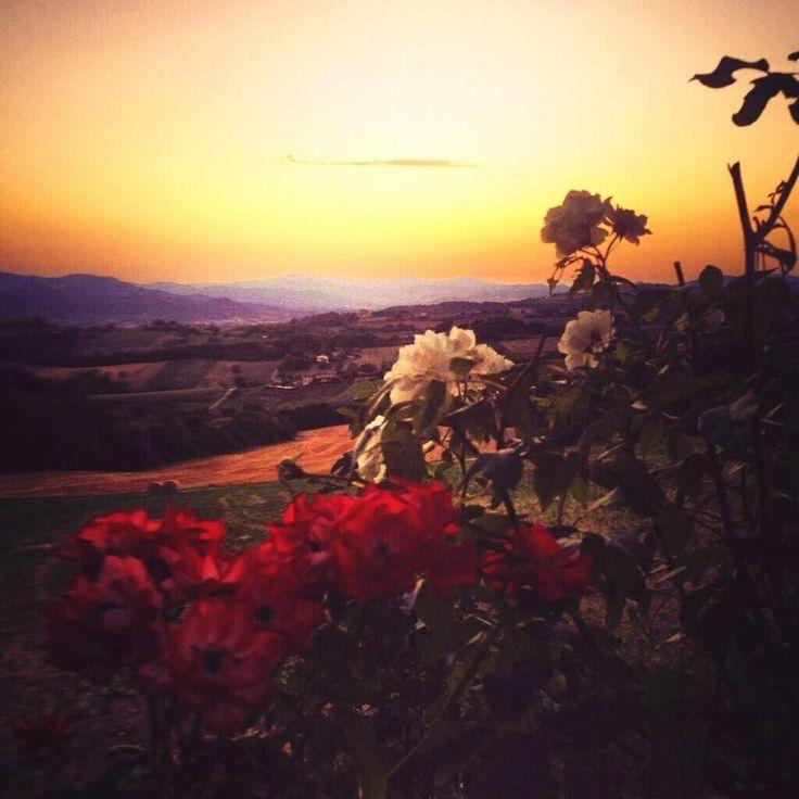 Croazia natura fiori cielo e quant'altro