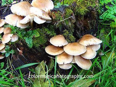 Mushrooms+and+moss+on+a+tree+stump.jpg (400×300)