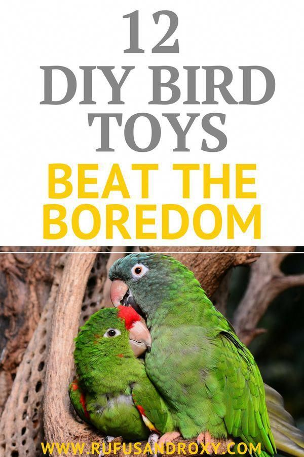 The Evolution Of A Bird Orb Parrotcaretips Parrot Care T