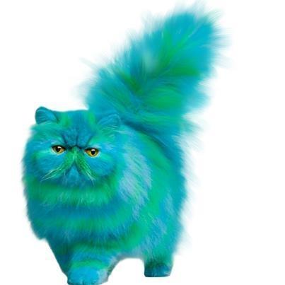 Cheshire Persian!  :)