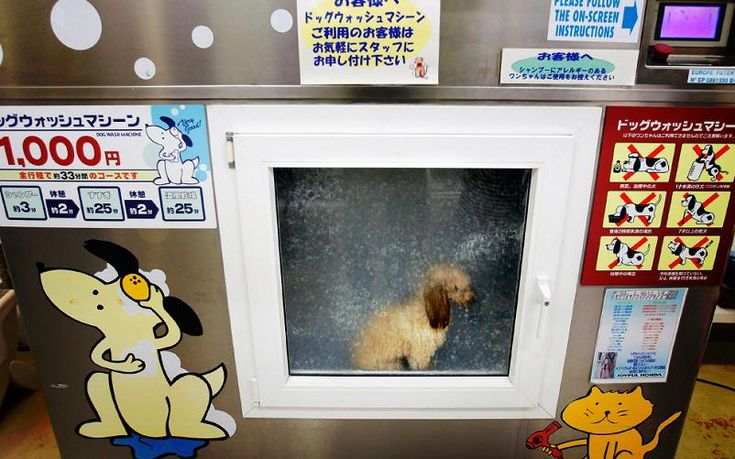 25 best dog grooming images on pinterest pet grooming dog only in japan photograph by ap photoitsuo inouye a toy poodle mizuho sits in dog wash machine for shampooing at a pet shop named pet world joyful honda solutioingenieria Gallery
