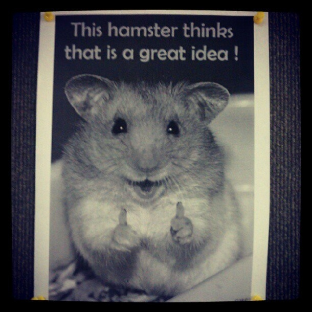 It's Going To Be A Great Day Says The Hamster: Worth Reading, Funny Funny, Things Thank Yous, Precious Things, Funny Stuff, Geeky Crap