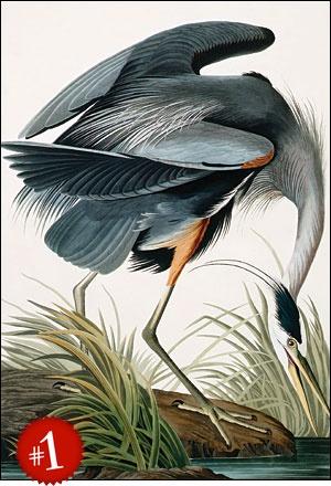John James Audubon Nature Jj Audubon Prints Pinterest
