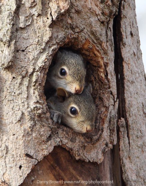 Bet you didn't know it was Squirrel Appreciation Day! (January 21)