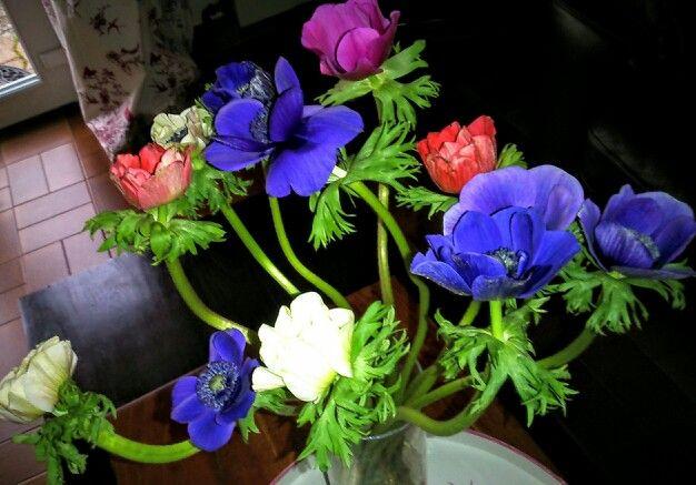 Mes fleurs favorites.. J'adore leirs couleurs