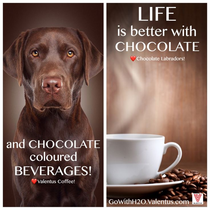 Monday morning meme! Who doesn't love chocolate?!  Valentus SlimROAST's ingredients include organic Cacao, which has 40 times the antioxidants of blueberries, highest plantbased source of iron, full of magnesium for healthy heart & brain, more calcium than cow's milk, and is a natural mood elavator and anti-depressant. #meme #lovechocolate #coffee #clean #natural #organic #glutenfree #nongmo #12in24 #valentus #bestversionofyourself
