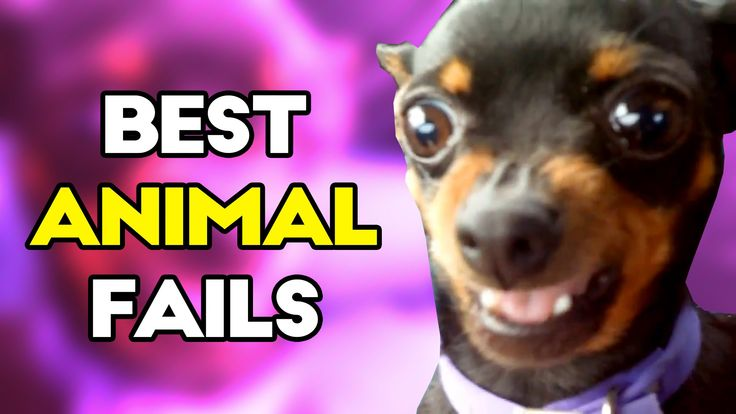 Best ANIMAL Fails of 2016 | Funny Fail Compilation