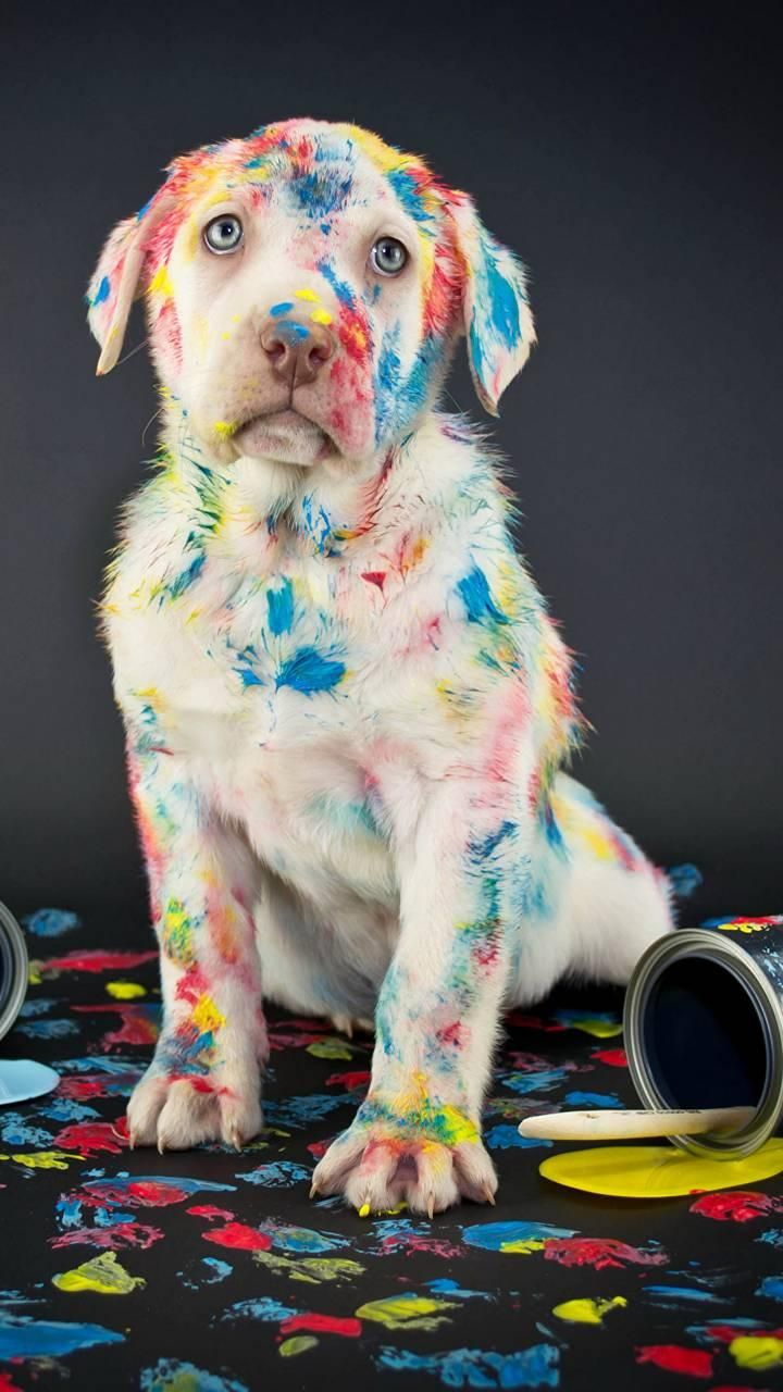 Download Paint Puppy Wallpaper By Minimumsavage Now Browse Millions Of Popular Dog Wallpapers And Rin Cute Dogs And Puppies Puppy Wallpaper Super Cute Puppies