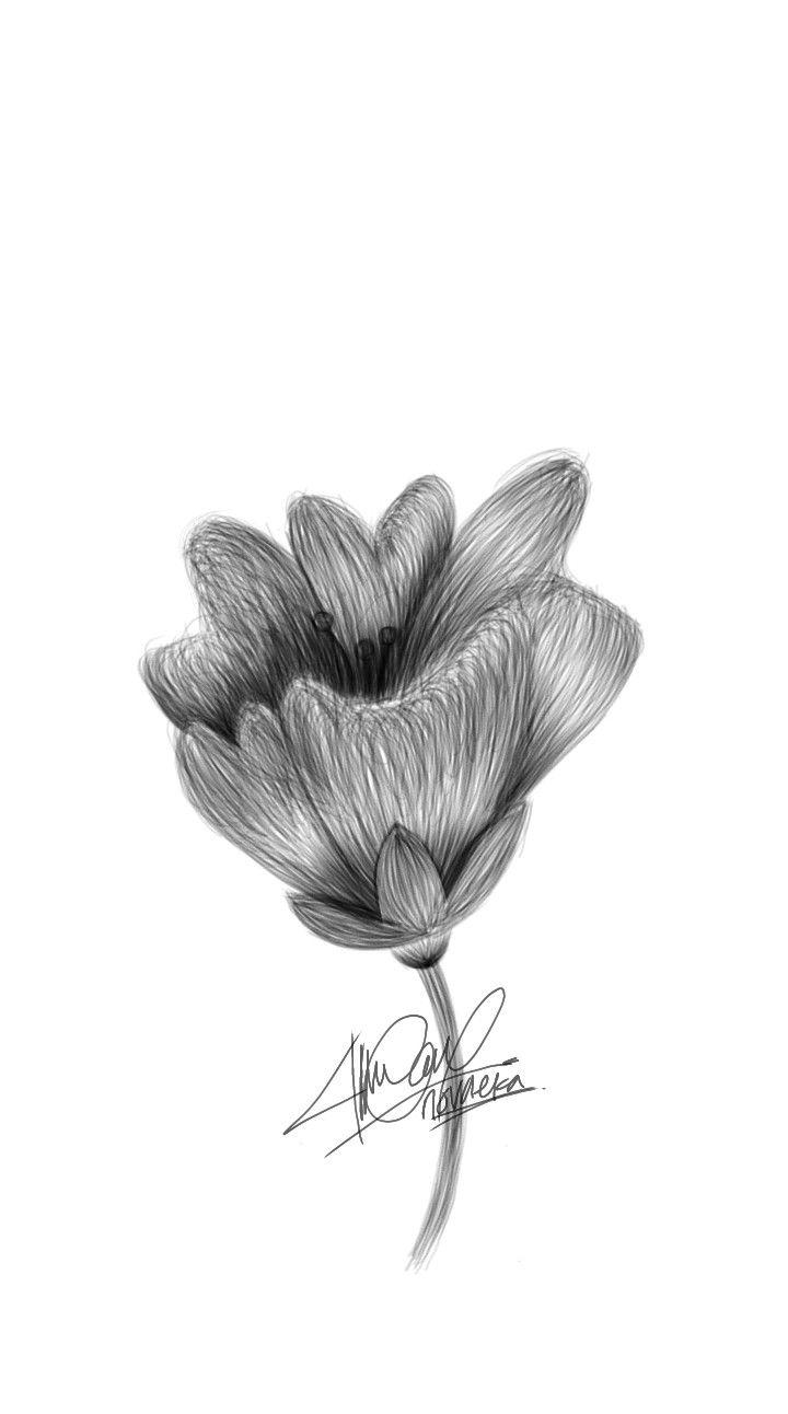Sketsa Hitam Putih : sketsa, hitam, putih, Digital, Bunga,, Sketsa,, Putih