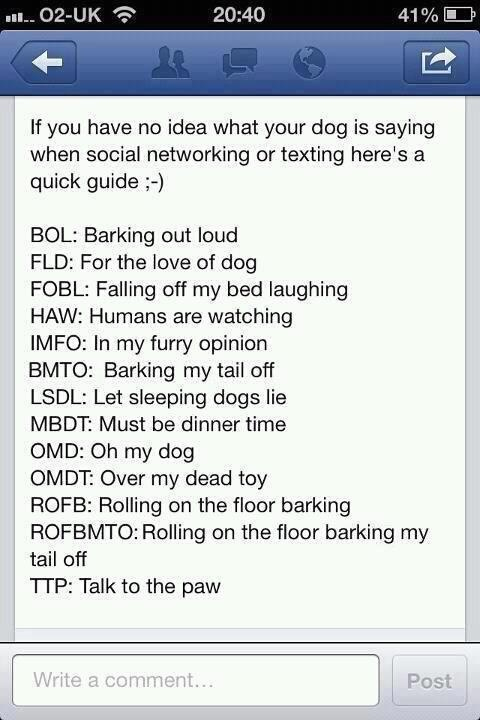 Pin by Valerie on The Wisdom of DOG... Dog texts, Funny
