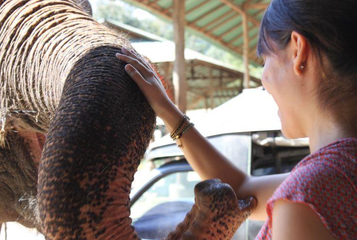 Freiwilligenarbeit Chiang Mai