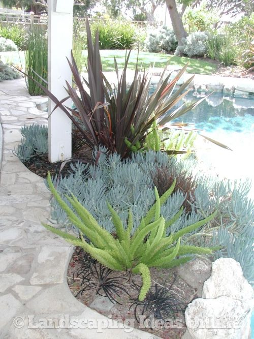 drought resistant plants - Google Search... Going to need these ideas this summer in California! Ugh!