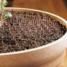So smart! So cats won't use plants as a litter box.  Cat Scat Mats, Set of 5