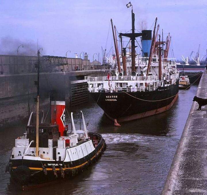 Nestor, Gladstone Dock early 60s.